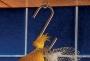M02 S Hook 4mm x 40mm
